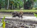 Farmer Ost-Java