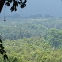 Dschungel auf dem Weg zum Vulkan